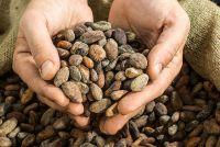 Можно ли пить какао при гипертонии: влияние на АД