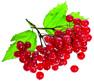 Яблочный уксус при гипертонии: рецепты и способы применения