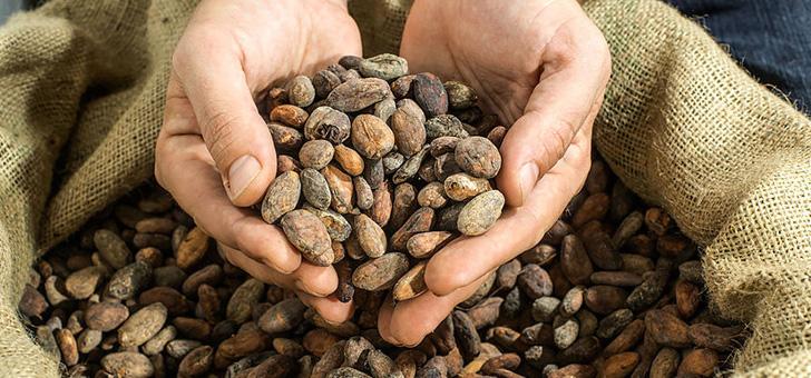 Какао без сахара снижает повышенное артериальное давление