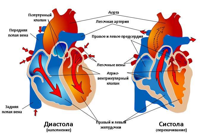 Аускультативный метод (Короткова) измерения артериального давления