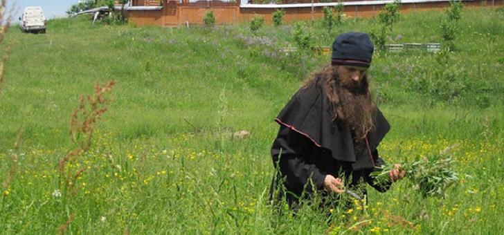 Монастырский сбор от гипертонии: состав трав, как принимать