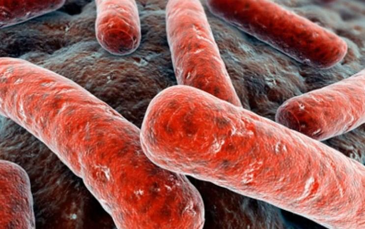 Туберкулез-чахотка