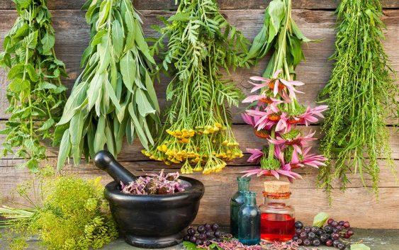 Травяные чаи, традиционныеурбечи,фитокомплексы, натуральная косметика
